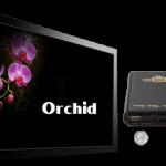 50d3e778ec282orchid